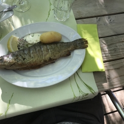 Fischen 2017_7